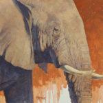 Paul Kratter, Elephant Portrait, oil, 16 x 20.