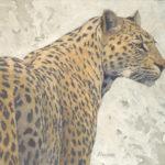 Paul Kratter, Leopard, oil, 16 x 18.