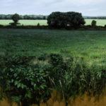 Bruno Capolongo, Meadowside, acrylic, 20 x 20.