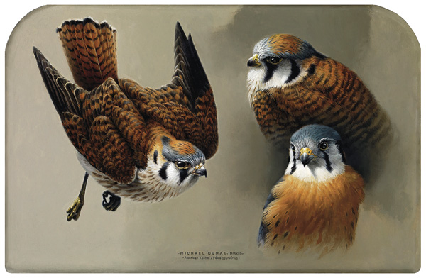 Michael Dumas, Flight of the Kestrel, oil, 8 x 12.