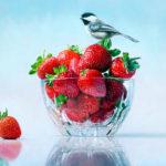Rebecca Korth, Chickadee & Strawberries, oil, 24 x 30.