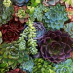 SHARON POMALES TOUSEY, Succulents I, oil, 12 x 12.